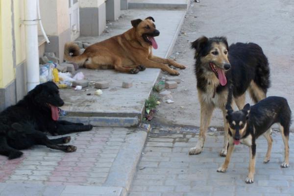 собаки в Новочеркасске